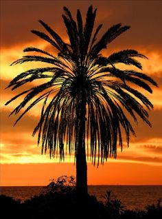 Palm Tree and Sunset share moments