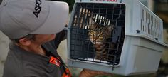 Hundreds of Caboodle Cats Go Home