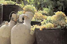 Espuertas de uva y cantaros