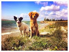 Dogs Summer Sun Wind Natur Love Sea