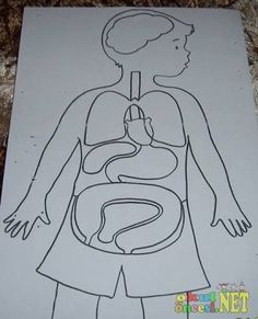 okul öncesi vücudumuz ile ilgili görsel sonucu