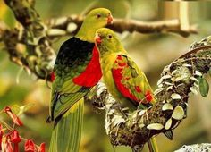 So awesome ..birds