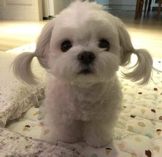 Love Cute Animals shares pics of playful animals, cute baby animals, dogs that stay cute, cute cats and kittens and funny animal images. Funny Animal Photos, Baby Animals Pictures, Cute Animal Pictures, Animals And Pets, Animal Pics, Funny Photos, Images Of Cute Dogs, Pictures Of Dogs, Funniest Photos