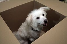 Tips for moving with pets.
