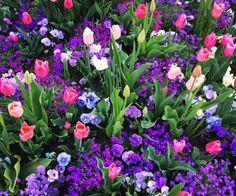 tulips-slc