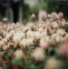 Very little grows on jagged rock. Be ground. Be crumbled, so wildflowers will come up where you are.
