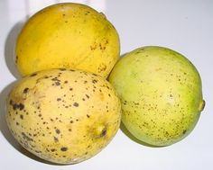 Starch mango is a long time favorite mango in Trinidad....by far my favourite...