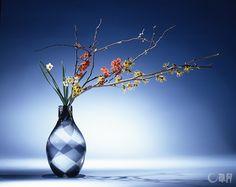 ぼけもまんさくも特徴のある美しい花木ですが、この作品の主役はすいせんです。個性的な脇役がメインを引き立てながら、ハーモニーを奏でています。花材:すいせん、まんさく、ぼけ 花器:ガラス花器 The main material is early spring Chinese sacred lily, complemented by unique, beautiful tree flowers like Japanese quince and Japanese witch-hazel. Material:Chinese sacred lily, Japanese witch hazel, Japanese quince Container:Glass vase  #ikebana #sogetsu