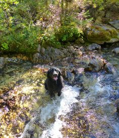 5 Idaho Cities with Dog-Friendly Adventures | Visit Idaho #doglove #travel