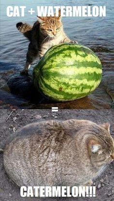 Cat Memes Of The Day 35 Pics - Ep27 #cats #catmemes #memes#lovelyanimalsworld - Lovely Animals World