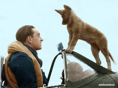 Colourising History - An RAF Spitfire Pilot and his pet Alsatian pup. Somewhere in England, 1940.  #Colourising #Colorizing #Colourisation #Colorization #WW2 #Spitfire #Alsatian #Pilot #RAF #1940