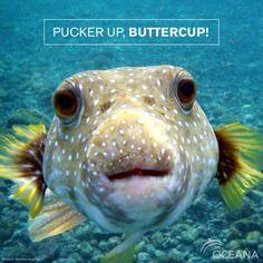 Pucker up buttercup!