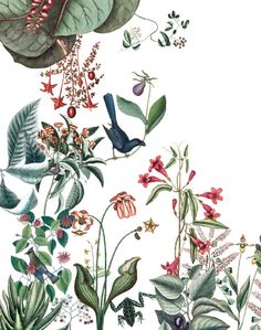 French pattern designers, Bien Fait are now available at The Pattern Collective! - French pattern designers, Bien Fait are now available at The Pattern Collective! Botanical Wallpaper, Botanical Art, Chinoiserie, Inspiration Wand, France Colors, French Pattern, Wall Wallpaper, Surface Design, Wall Murals