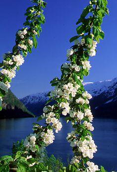 Spring in Hardanger, Norway