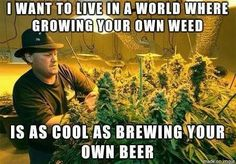 Save money, grow your own marijuana and make small edible delicious marijuana… Brew Your Own Beer, Pineapple Express, Puff And Pass, Best Bud, How To Make Beer, Smoking Weed, Medical Marijuana, Vape Memes, Plants