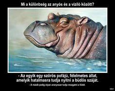 Hippopotamus, Random Pictures, Picture Video, Haha, Jokes, Bts, Videos, Funny, Animals
