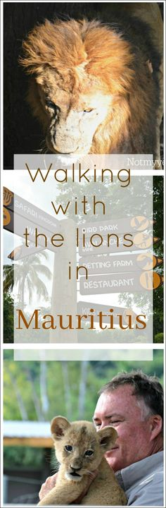 Mauritius � The Safari, Walking with Lions, and the Zoo