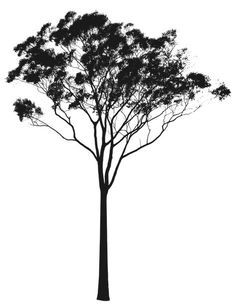 Eucalyptus or Gum Tree Silhouette Australia Tree Line Drawing, Tree Drawings Pencil, Tree Line Tattoo, Collage Architecture, Tree Silhouette Tattoo, Australian Tattoo, Tree Photoshop, Tree Stencil, Stencils