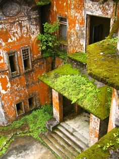 abandoned. nice angle and combo of life and decay.