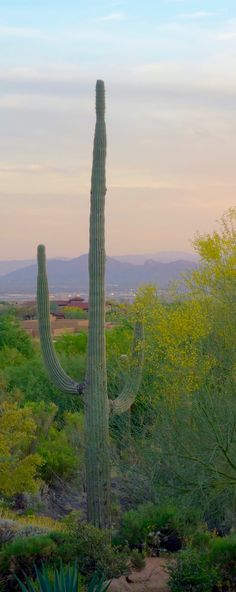 A good way to explore the beautiful Sonoran Desert is at Brown's Ranch near the Four Seasons Scottsdale Resort. And a fun way to explore is on a mountain biking adventure with Arizona Outback Adventures.