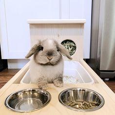 Rabbit Hay Feeder With Litter Box Food and Water Bowls Rabbit Feeder, Hay Feeder, Rabbit Litter Box, Pet Rabbit, Bunny Cages, Rabbit Cages, Pet Bunny Rabbits, Bunnies, Bunny Room
