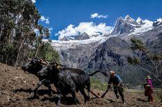 la agricultura familiar Peru