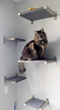 Floating Cat Shelves with IKEA GRANHULT - IKEA Hackers Floating Cat Shelves, Diy Cat Shelves, Cat Climbing Shelves, Diy Climbing Wall, Cat Walkway, Ikea Cat, Red Living Room Decor, Cat House Diy, Cat Activity