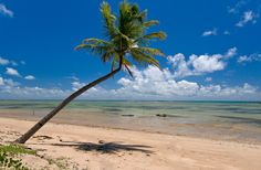 Praia do Patacho – Porto de Pedras -Alagoas- Brasil
