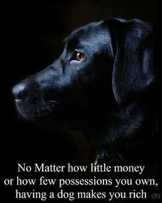 this is very true..a dog's love is priceless