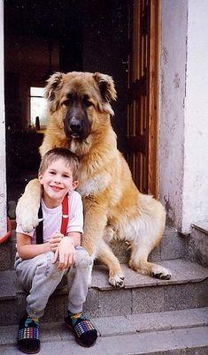 Caucasian Shepherd Dog..!