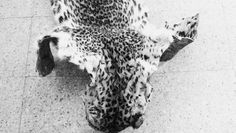 File photos of a Leopard pelt and nails seized at Aldur Forest in Chikkamagaluru Forest Range | G Veeresh