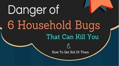 There are a number of dangerous household bugs that can infest your home and make it unpleasant for those living there. Bugs can also have a negative impact on human health.