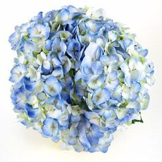 One of the BEST selling and most popular flowers for wedding arrangements, the hydrangea has many fine characteristics. They are grown in hot Pink And Blue Flowers, Bunch Of Flowers, Diy Flowers, Wedding Flowers, Hydrangea Not Blooming, Blue Hydrangea, Hydrangeas, Most Popular Flowers, Wedding Arrangements
