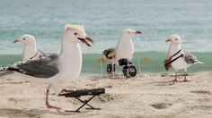 Ad of the Day: Flock of Seagulls Sings a Flock of Seagulls Song for Cape Cod Chips | Adweek