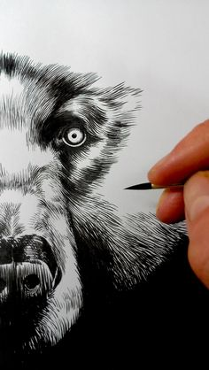 Sophie Franz reintroduce illustration into my life - combine comic strips with detailed b&w drawing - very real - very raw Drawing Sketches, Art Drawings, Pencil Drawings, Sketching, Animal Drawings, Illustration Arte, Ink Illustrations, Instalation Art, Art Graphique