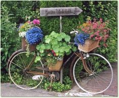 Old bicycle to hold hanging baskets