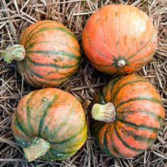 'Amazonka' Squash  If you're looking for a winter squash that won't send its vines wandering far and wide, this one fits the bill with a more restrained growth habit. The orange-fleshed fruits, up to 2 pounds in size, have a nutty sweetness.  Source: The Cook's Garden