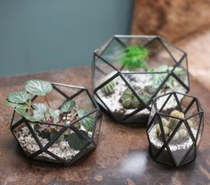 These black antique geometric metal planters style indoor plants beautifully. Perfect for creating an indoor garden look. Glass Planter, Metal Planters, Glass Terrarium, Hanging Planters, Terrarium Ideas, Stained Glass Crafts, Stained Glass Patterns, Tiffany, Nature Color Palette