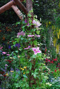 Clematis Nelly Moser Flower Garden, Plants, Garden, Cottage Garden, Fairy Garden, Outdoor Gardens, Flowers, Clematis, Gardening Tips