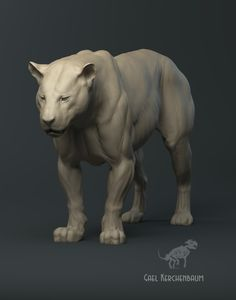 Tiger anatomy study, gael kerchenbaum on ArtStation at https://www.artstation.com/artwork/QWR2l
