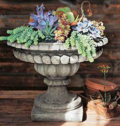 cracked birdbath for succulents
