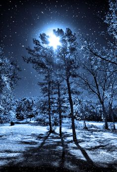 Full moon on a snowy night...Belle seems to love this because the moon and the snow are in the same picture lol