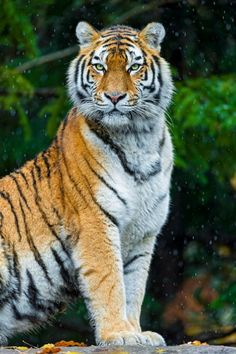Elena posing and watching the snow fall - By: (Tambako the Jaguar)