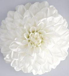 Daalia 'Maxi Lopez' Dahlia, Floral, Flowers, Jewelry, Garden Planning, Jewlery, Jewerly, Schmuck, Jewels