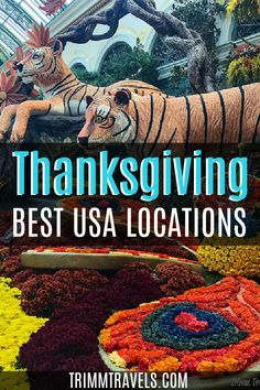 Change up your Turkey Day celebration this year and check out these best places to spend Thanksgiving in the United States! Thanksgiving   Thanksgiving in the United States   Thanksgiving in the USA   Thanksgiving USA   Fall Holidays in USA   USA at Thanksgiving   Where to Go for Thanksgiving   Thanksgiving Travel   Travel at Thanksgiving   #thanksgiving #unitedstates #usa #holiday #fall