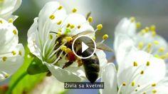 Včely prosperovali na Zemi takmer 50 miliónov rokov a každá z ich kolónii je zložená zo 40 až 50 000 jedincov, ktorí...