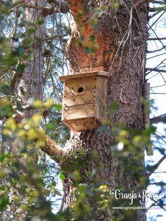 Caja nido para páridos. La Murta (Alzira) Bird, Outdoor Decor, Home Decor, Nesting Boxes, Birds, Homemade Home Decor, Interior Design, Home Interiors, Decoration Home