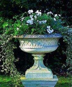 Garden Urn With Flowers And Trailing Ivy