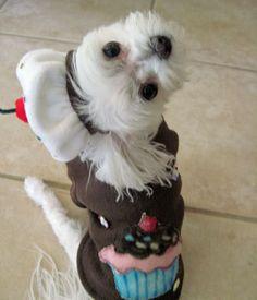 a halloween puppy imdb