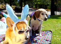 """Wait, was that the Easter Bunny?"" #PushiPups #PushPushi"